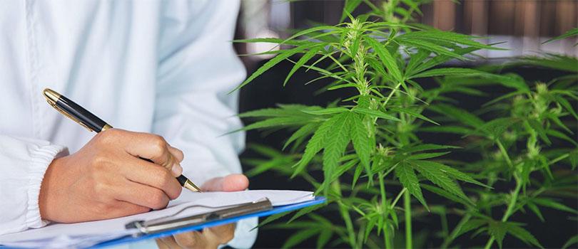 Technical cannabis writing
