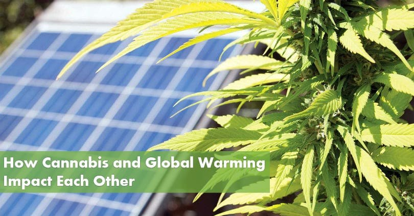 How Cannabis and Global Warming Impact Each Other