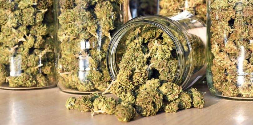 Marijuana Buds Stored in a Jar