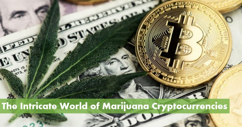 what weed crypto coins to invest stategy for trading gold binary options