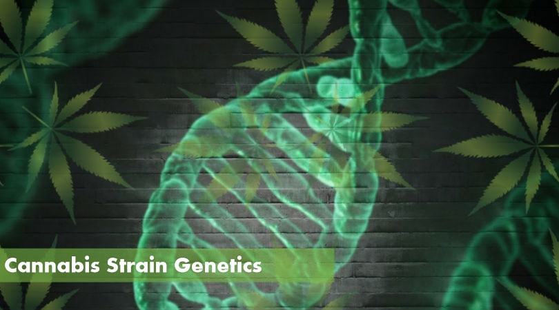 The Complete Guide to Cannabis Strain Genetics
