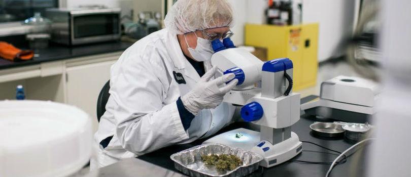 Cannabis Labs