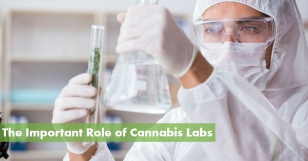 The Important Role of Cannabis Labs