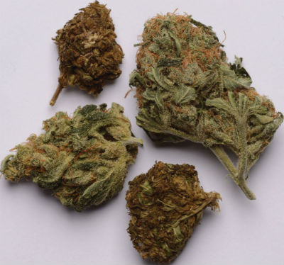 Hallmarks of good weed vs. bad weed