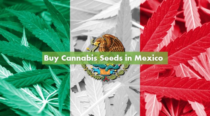 Buying Cannabis Seeds in Mexico