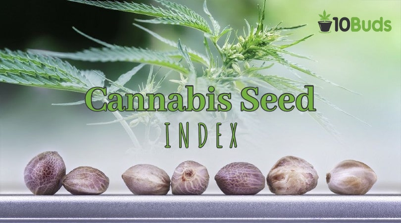 Cannabis Seed Index Cover Image