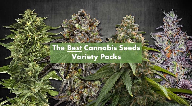 Best Cannabis Seeds Variety Packs