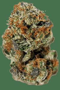 Chernobyl Seeds Bud
