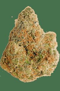 Cherry Pie Seeds Bud