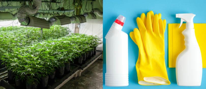 Clean Marijuana Indoor Grow Room