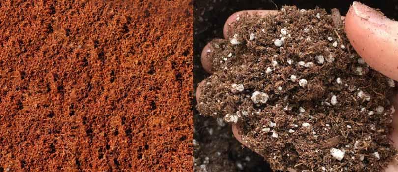 Coco Coir or Soil Cannabis