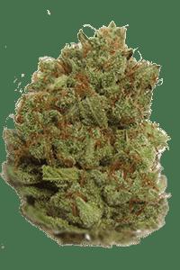 Critical Kush Seeds Bud