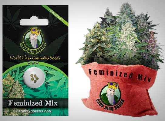 Crop King Seeds Feminized Seeds Mix.