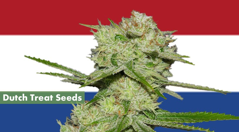 Dutch Treat Seeds Cover Photo