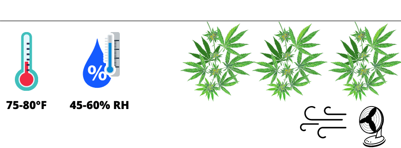 Environmental conditions Hanging Cannabis