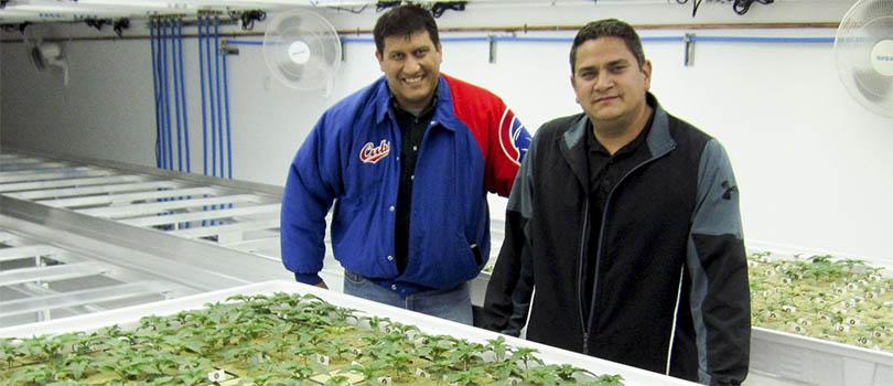Flandreau Santee Sioux Tribe Marijuana