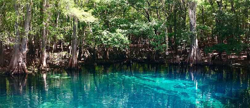 Florida Blue Wells