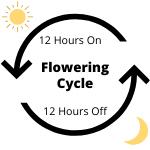 Flowering Cycle