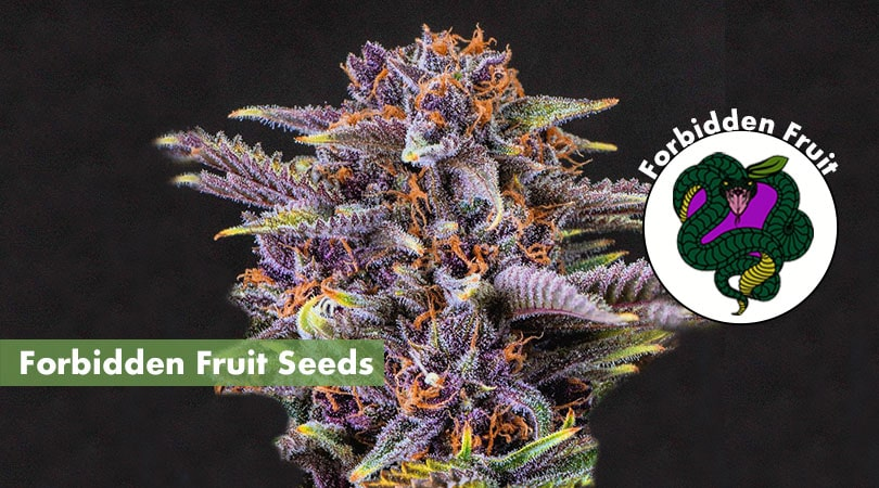 Forbidden Fruit Seeds Main Photo