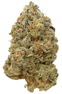 G13 Weed Bud