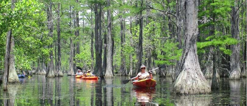 Georgia Wetland