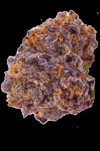 Granddaddy Purple Seeds Bud
