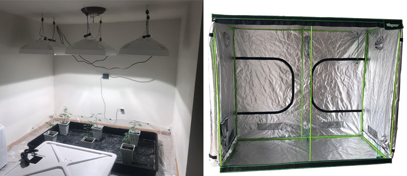 Grow Tent or Grow Room