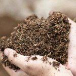 Soil as Grow Medium