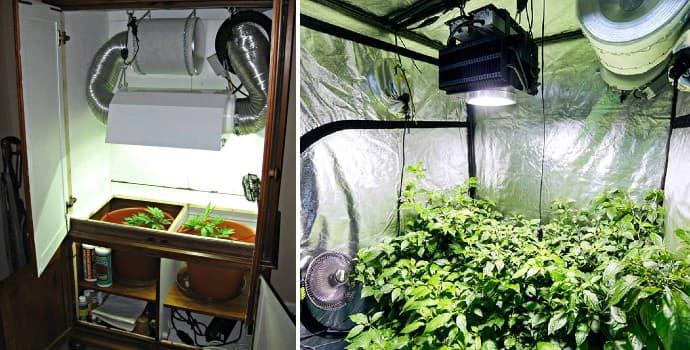 Grow Room vs Grow Tent