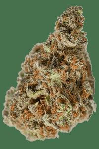 Herijuana Seeds Bud