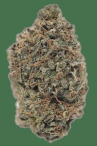 Hindu Kush Seeds Bud