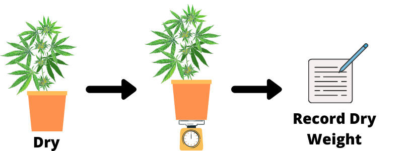 How to Check When To Water Cannabis Plants 1