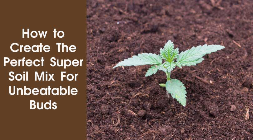 How to Create The Perfect Super Soil Mix For Unbeatable Buds Cover Photo