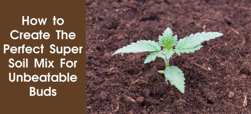 How to Create The Perfect Super Soil Mix For Unbeatable Buds Featured Image