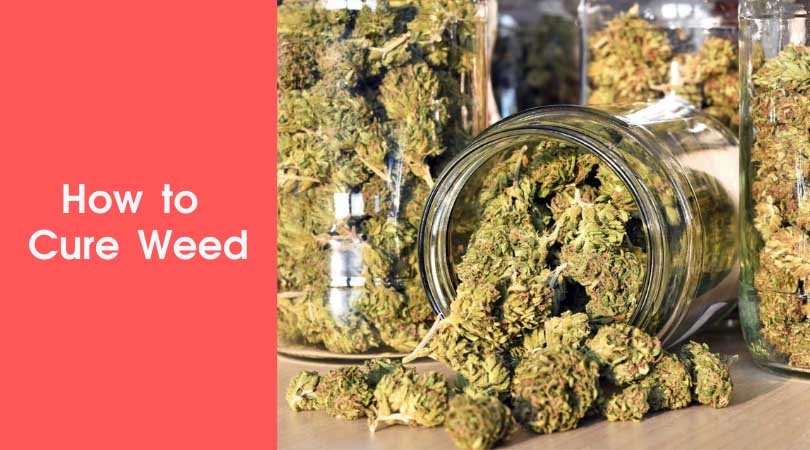 How to Cure Weed Cover Photo