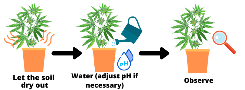 How to Fix an Overwatered Cannabis Plant