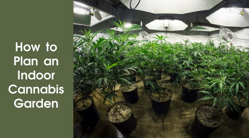 How to Plan an Indoor Cannabis Garden Cover Photo