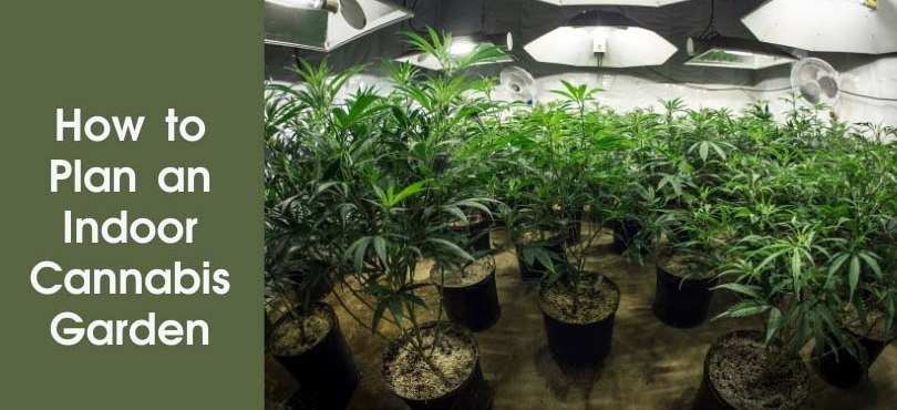How to Plan an Indoor Cannabis Garden Featured Image