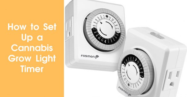 How to Set Up a Cannabis Grow Light Timer Featured Image