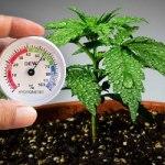 Humidity and Marijuana Plants