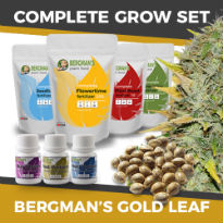 ILGM's Grow Kit - Bergman's Gold Leaf