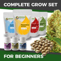 ILGM's Grow Kit for Beginners