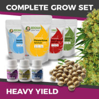 ILGM's Grow Kit - Heavy Yield