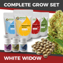 ILGM's Grow Kit - White Widow