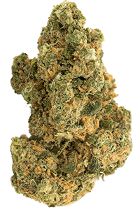 Island Sweet Skunk Seeds Bud