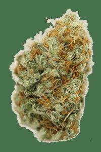Kali Mist Seeds Bud