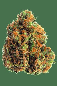 King Louis Weed Bud