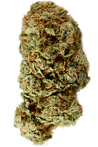 Kosher Kush Seeds Bud