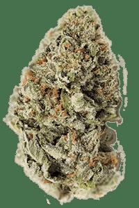 LA Confidential Seeds Bud