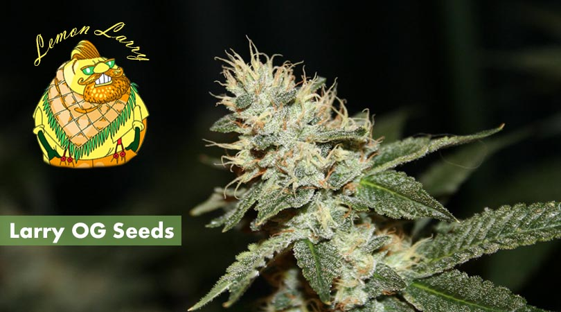 Larry OG Seeds Cover Photo